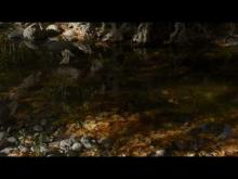 Embedded thumbnail for Autumn in Lesvos island, Greece